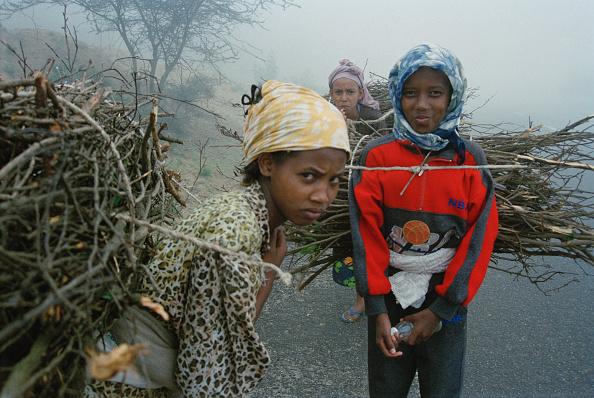 Teenager「Firewood In Eritrea」:写真・画像(0)[壁紙.com]