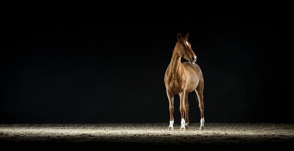 Animal「茶色の馬立っているホールに乗って」:スマホ壁紙(15)