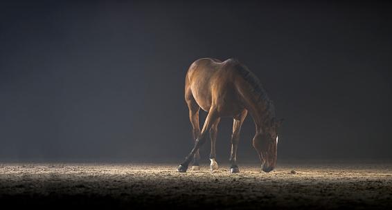 Horse「茶色の馬立っているホールに乗って」:スマホ壁紙(13)