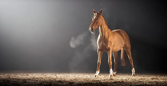 Horse「茶色の馬立っているホールに乗って」:スマホ壁紙(19)