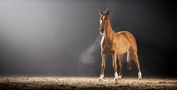 Horse「茶色の馬立っているホールに乗って」:スマホ壁紙(7)