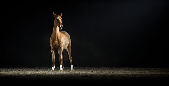 Horse「茶色の馬立っているホールに乗って」:スマホ壁紙(9)