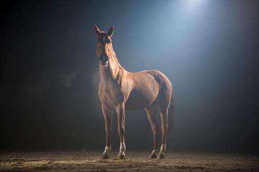 Horse「Brown horse」:スマホ壁紙(7)