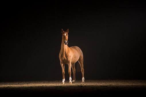 Horse「Brown horse」:スマホ壁紙(12)