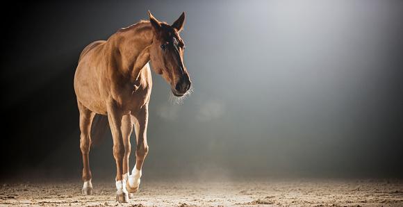 Horse「夜ホールに乗って歩く茶色の馬」:スマホ壁紙(18)