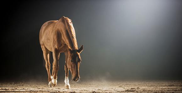 Horse「夜ホールに乗って歩く茶色の馬」:スマホ壁紙(14)