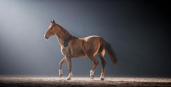 Horse「夜ホールに乗って歩く茶色の馬」:スマホ壁紙(15)