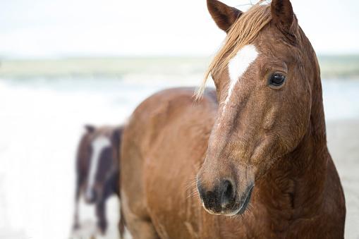 Horse「Brown horses on a beach」:スマホ壁紙(3)
