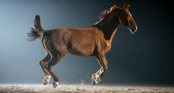 Horse「夜ホールに乗って動いている茶色の馬」:スマホ壁紙(10)