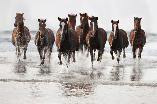 Horse「Brown Horses running on a beach」:スマホ壁紙(9)