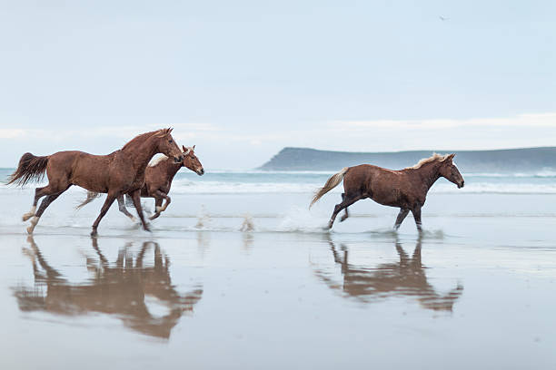 Brown horses running on a beach:スマホ壁紙(壁紙.com)