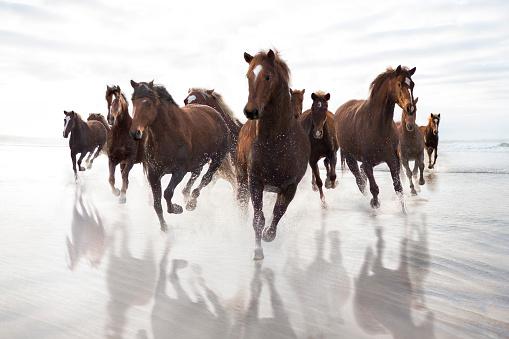 Horse「Brown Horses running on a beach」:スマホ壁紙(1)