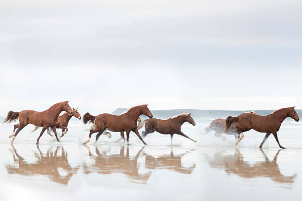 Brown Horses running on a beach:スマホ壁紙(壁紙.com)