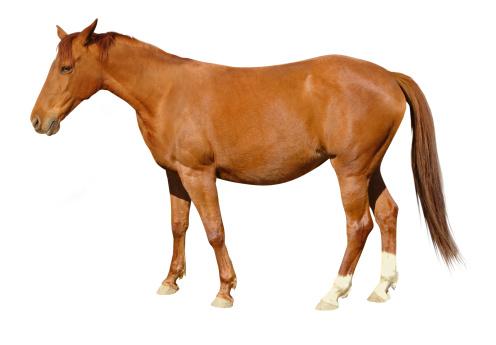 Horse「Brown Horse」:スマホ壁紙(17)