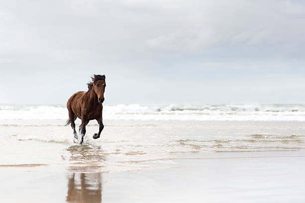Brown horse running on a beach:スマホ壁紙(壁紙.com)