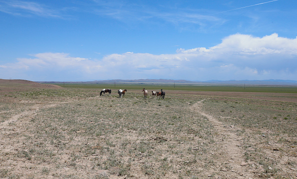 野生動物「Trump Bureau Of Land Management Budget Seeks To Cull U.S. Wild Horses」:写真・画像(15)[壁紙.com]
