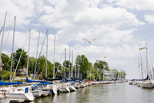 Seagull「Docked Sailing Boats」:スマホ壁紙(14)