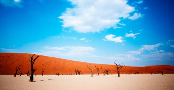 Namibia「Dead desert trees」:スマホ壁紙(3)
