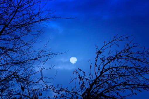 月「スプーキーブルースカイに囲まれた葉のない木の枝」:スマホ壁紙(2)