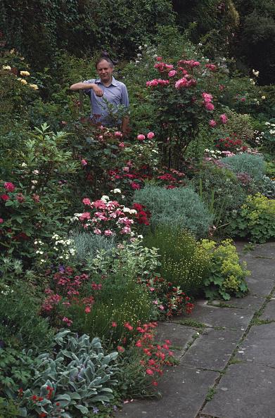 Ornamental Garden「Guy Acloque」:写真・画像(11)[壁紙.com]