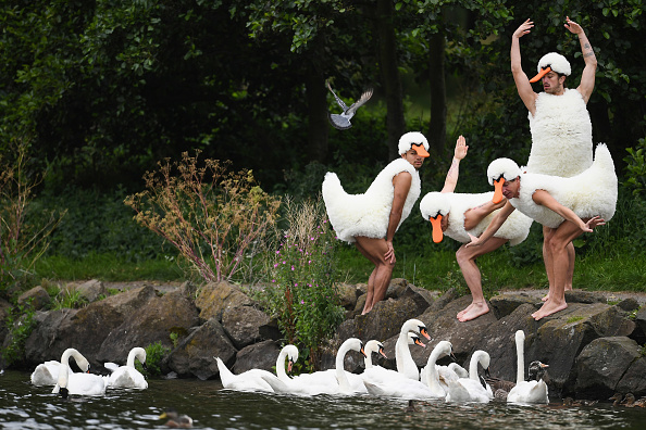 Bestpix「Dancers From The French Act Tutu Perform Spoof of Swan Lake」:写真・画像(17)[壁紙.com]