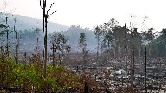 Deforestation「Borneo Kalimantan forest fires」:スマホ壁紙(8)