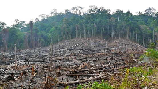Deforestation「Borneo Kalimantan forest fires」:スマホ壁紙(13)