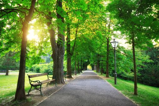 Lush Foliage「Sunrise In a Green Park」:スマホ壁紙(15)