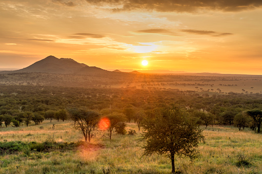 Tanzania「Sunrise in Serengeti national park, landscape with sunlight effect, Africa.」:スマホ壁紙(14)