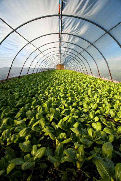 Organic greenhouse:スマホ壁紙(壁紙.com)