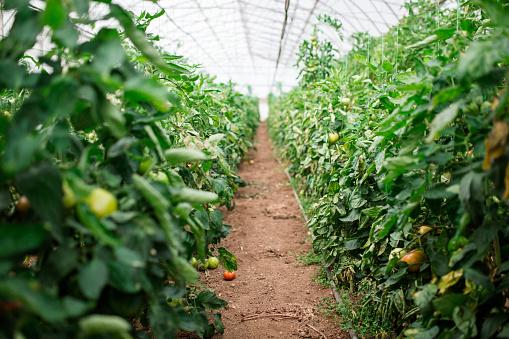 Homegrown Produce「Organic Greenhouse」:スマホ壁紙(2)
