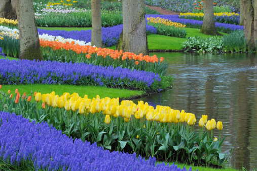 Keukenhof Gardens「Formal Garden in spring with Tulips.」:スマホ壁紙(0)