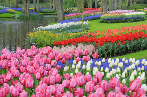 Keukenhof Gardens「Formal Garden in spring with tulips.」:スマホ壁紙(18)