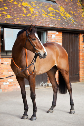 Horse「National Hunt Steeplechaser」:スマホ壁紙(12)