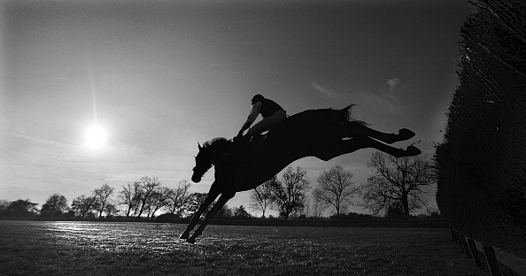 Mammal「National Hunt Horse Racing at Warwick Race Course 1998」:写真・画像(12)[壁紙.com]