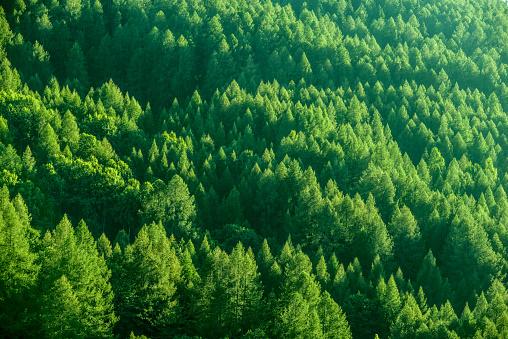 Piedmont - Italy「Trees Background」:スマホ壁紙(18)
