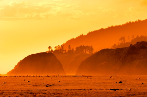 Cannon Beach「Birds on water at sunset」:スマホ壁紙(15)