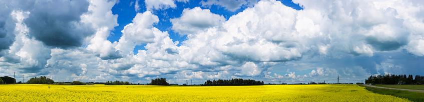 cloud「Clouds in a blue sky over a yellow canola field」:スマホ壁紙(15)