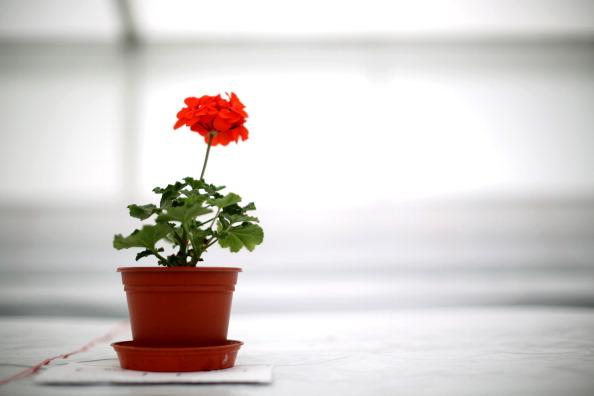Plant「Preparation For Southport Flower Show」:写真・画像(3)[壁紙.com]