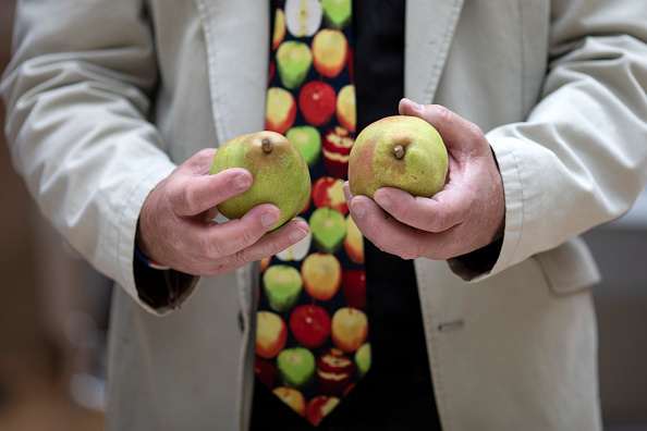 Fruit「RHS Autumn Show Opens To The Public」:写真・画像(14)[壁紙.com]