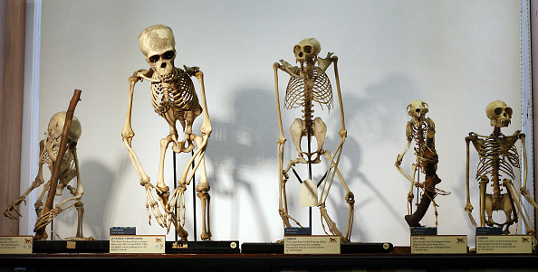 Primate「The Grant Museum Of Zoology Houses A Collection Of Weird And Wonderful Artefacts」:写真・画像(5)[壁紙.com]