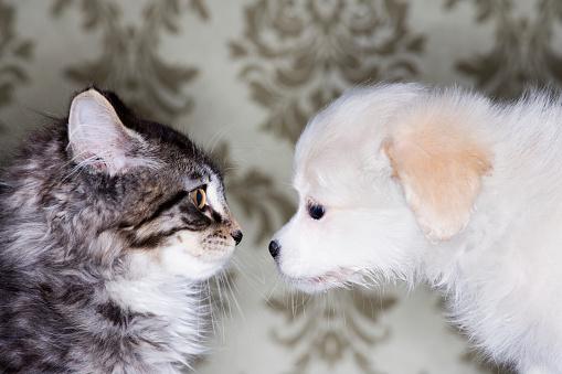 Mixed-Breed Cat「Puppy and Kitten」:スマホ壁紙(6)