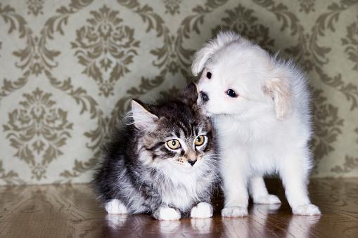 Mixed-Breed Cat「Puppy and Kitten」:スマホ壁紙(7)