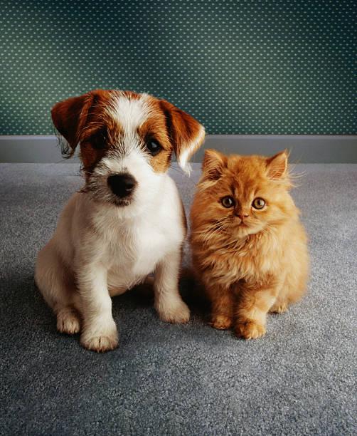Puppy and Kitten:スマホ壁紙(壁紙.com)