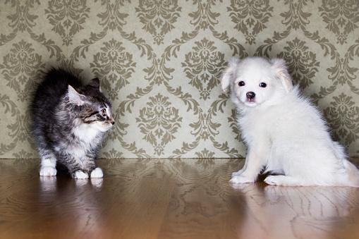 Mixed-Breed Cat「Puppy and Kitten」:スマホ壁紙(10)
