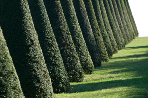 Footpath「Clipped Conical Shaped Yew Trees (Taxus) Along Grass Garden Pathway, France」:スマホ壁紙(17)