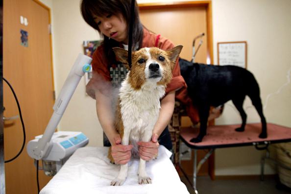 Spa「Dog Spa Thrives While Japan Enjoys National Holiday」:写真・画像(15)[壁紙.com]