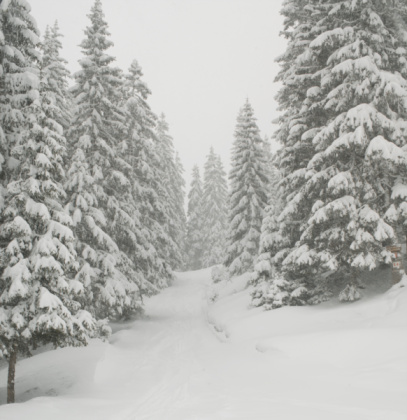 Trois Vallees「Tracks in snowy landscape flanked by fir trees」:スマホ壁紙(12)