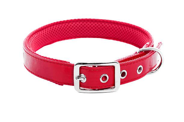 Dog Collar:スマホ壁紙(壁紙.com)