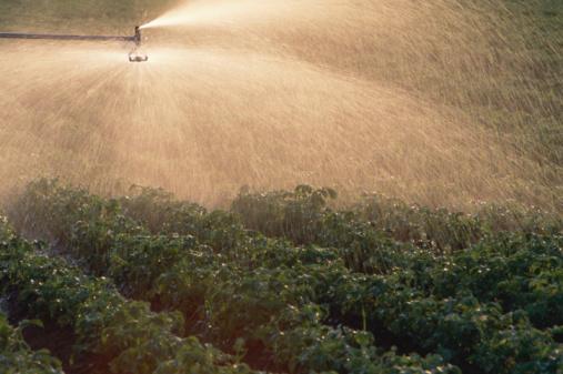 Insecticide「Sprinkler watering potato plants」:スマホ壁紙(1)